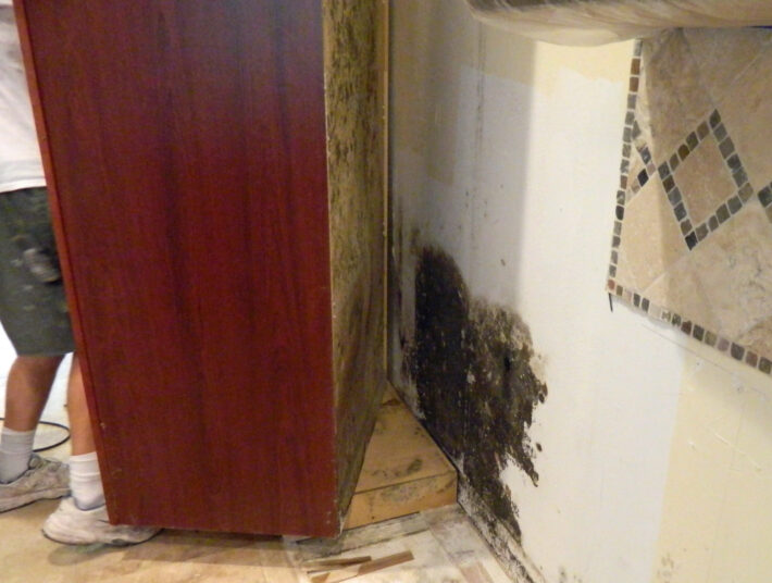 Mold Removal Orange County Ny